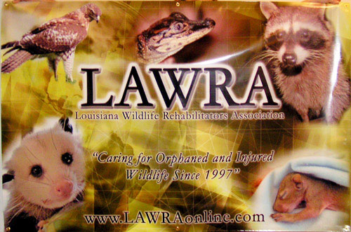 Full Color Digital Banner for LAWRA, Designed and Printed in House